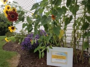 Penny_Gardens_For_Hope